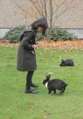 uvic_rabbits